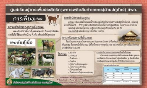ศูนย์เรียนรู้การเพิ่มประสิทธิภาพการผลิตสินค้าเกษตร(ด้านปศุสัตว์) ศพก.-การเลี้ยงแพะ